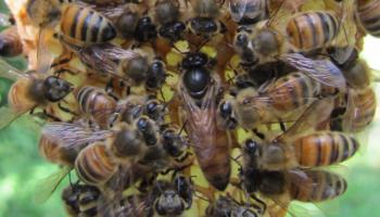 Bees-on-a-hive