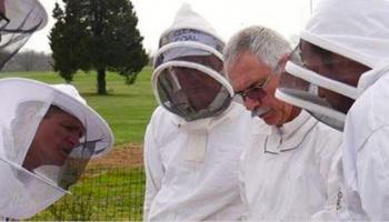 people in bee handling suits